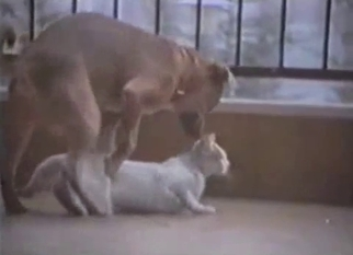 Doggy is trying to drill a white cat