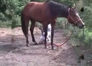Horse gets sucked by a lusty zoophile